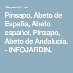 Pinsapo, Abeto de España, Abeto español, Pinzapo, Abeto de Andalucía. - INFOJARDIN.