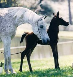 Paige Howlett uploaded this image to 'Horses'.  See the album on Photobucket.