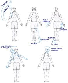 Four movements of the human body: abduction (move away from the midline), adduction (draw to the midline), internal rotation, and external rotation.