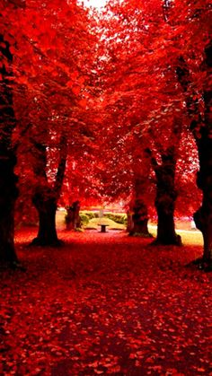 Red Spring by: srk_don2