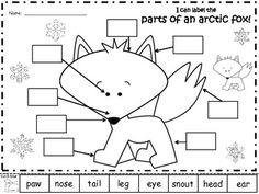 A+ Arctic Fox: Label The Parts Of The Arctic Fox Fox Craft Preschool, Preschool Labels, Preschool Winter, Kindergarten Crafts, Preschool Learning, Preschool Activities, Teaching, Animal Worksheets, Animal Activities
