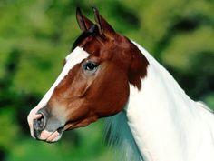 Cabeça de um cavalo