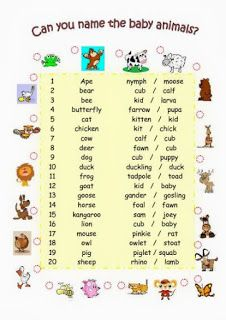 Male and female animals name list pdf