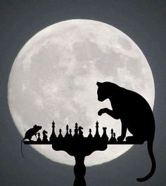 Shop Personalized Chess Full Moon Cat and Mouse Game Square Sticker created by SilhouetteCollection. Personalize it with photos & text or purchase as is! Crazy Cat Lady, Crazy Cats, Tier Fotos, Moon Art, Cat Drawing, Stars And Moon, Cool Cats, Cat Art, Cats And Kittens