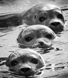 seals. <3 Awwwe