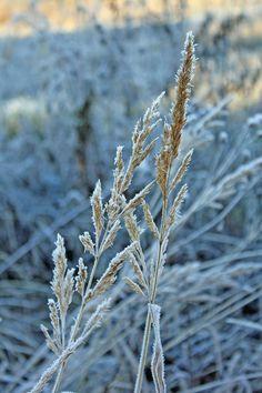 Elämää maalaismaisemissa: Lupaus talvesta