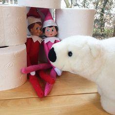 Kein Schnee für Kobolde Oder so ähnlich  Stell dir vor du willst neues Toilettenpapier holen und musst feststellen dass die beiden sich ein Iglu davon gebaut haben  Die hatten wohl Heimweh nach dem Nordpol der Eisbär findet es auch richtig gut  In vielen Teilen von Deutschland schneit es ja hier fast am Rhein aber nicht  Habt ihr schon Schnee?  #elfontheshelf #ivotheelf #lebenmitkindern #familienblog #familienleben #weihnachtstradition #advent #eisbär #iglu #mamablogger #familienblogger Elf On The Shelf, Kobold, Advent, Holiday Decor, Home Decor, Instagram, North Pole, Missing Home, Toilet Paper