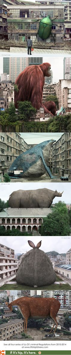 Artist Liu Di plays with proportions between live creatures and surroundings. See all four series at http://www.ifitshipitshere.com/lui-di-animal-regulations/