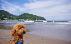 Usami beach | 2013.6.22