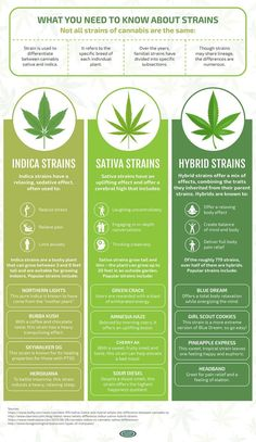 """herbmedication: """" what you need to know about these strains World Class Cannabis Seeds """" Ganja Stuff Cannabis Edibles, Cannabis Growing, Cannabis Plant, Cannabis Oil, Weed Types, Thc Oil, Weed Facts, Medical Marijuana, Weed"""