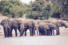Afrique: 3 découvertes lecture pour les 11 ans et plus Les Themes, Elephant, Animals, Africa, Animais, Animales, Animaux, Elephants, Animal