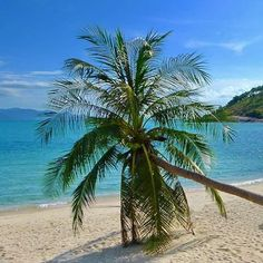 """See 212 photos from 456 visitors about honeymoon, scenic views, and beachfront suite. """"Beautiful, secluded resort in Koh Samui. Awesome choice for a. Koh Samui, Beaches, Thailand, Palm, Photo And Video, Water, Coconut, Corner, Outdoor"""