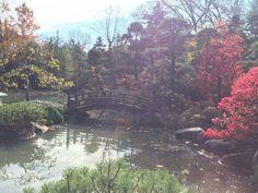 Anderson Japanese Garden Rockford Illinois