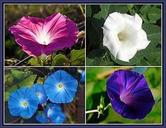 Nice Top 10 Best Climbing Plants With White Flowers - Top Reviews