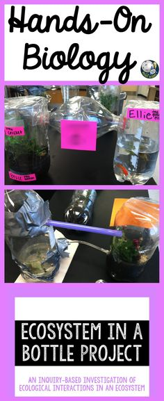 Take what students learn in class and apply it to living things!  The Ecosystem in a Bottle Project is a fun, hands-on, and interactive biology lab that your students will remember forever!  Perfect long-term assessment for an ecology unit.  Also a great project if you teach project-based learning!