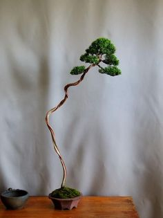 Indoor Bonsai Tree, Mini Bonsai, Bonsai Plants, Bonsai Garden, Garden Trees, Garden Art, Bonsai Trees, Acer Palmatum, Bonsai Nursery