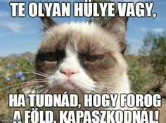 Grumpy cat, grumpy cat meme, grumpy cat humor, grumpy cat quotes, grumpy cat funny … For the funniest memes and jokes visit www. Grumpy Cat Quotes, Cat Memes, Funny Memes, Grumpy Meme, Meme Meme, Hilarious Jokes, Memes Humor, Funny Quotes, Sayings