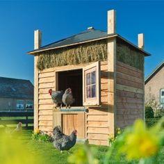 Kleine hooiberg met deur, waar kippen uit komen.