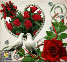 Beautiful Love Pictures, Cute Love Gif, Beautiful Gif, Beautiful Birds, Dove Images, Love Heart Images, Love You Images, Red Rose Flower, Beautiful Rose Flowers