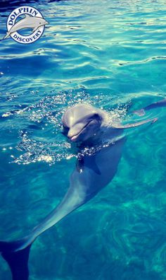 Dolphin poses...