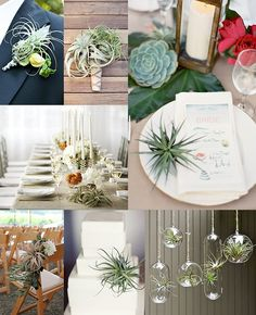 From boutonnieres to place settings. Some stunning examples of air plants as wedding decor.