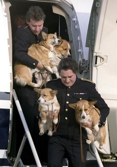 corgidogsorg:  The life of Royal Corgis.  I love this photo. I want to be a royal corgi handler.