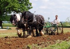 Ed Haymer at Chagfood ploughing the field at his sustainable food project in Chagford. Visit Devon, Visit Britain, Agriculture, Farming, Market Garden, North Devon, Sustainable Food, Dartmoor, Seasonal Food