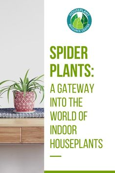 Houseplants can be intimidating when you've never taken care of them before. But like any other skill, you can get better with practice. So the best thing to do is start out with a hardy, easy plant so you can dip your toes in the wonderful world of h Large Indoor Plants, Outdoor Plants, Types Of Houseplants, Bond, Tiny White Flowers, Fiddle Leaf Fig Tree, Mother Plant, Spider Plants, Plants