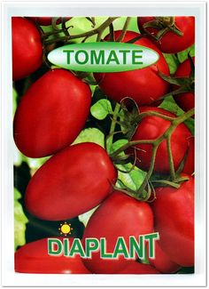 Seminte tomate  DIAPLANT. Vegetables, Food, Tomatoes, Hoods, Vegetable Recipes, Meals, Veggies
