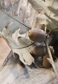 + #autumn #acorns #fallen_foliage