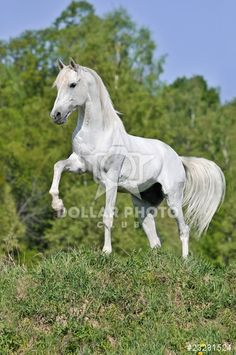 http://www.dollarphotoclub.com/stock-photo/white horse on hill/23281524 Dollar Photo Club millions of stock images for $1 each