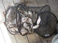 Moje pasje : Z batem na ryby.