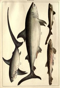 Our country's fishes and how to know them  London :Simpkin, Hamilton, Kent & Co.,[1902]  Biodiversitylibrary. Biodivlibrary. BHL. Biodiversity Heritage Library