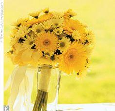 Google Image Result for http://2.bp.blogspot.com/_4LhMEfpMV2U/Svm58_57gaI/AAAAAAAAAww/_UuJvcY2Ou0/s400/daisy.jpg