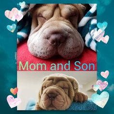 Mommy Momo and Gus-Gus Shar Pei, Sons, Chinese, My Son, Boys, Children, Chinese Language