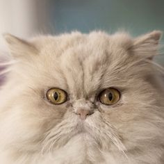 I've been checking my food bowl every two minutes and it's still empty! Cat Therapy, Humorous Quotes, Cat City, Types Of Cats, Persian Kittens, Cool Writing, Food Bowl, Cute Cats And Kittens, Kitty Kitty