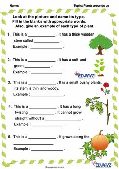 Pre K Math Worksheets, Worksheet For Class 2, Matter Worksheets, School Worksheets, English Teaching Resources, English Worksheets For Kids, English Lessons For Kids, Photosynthesis Activities, States Of Matter Worksheet