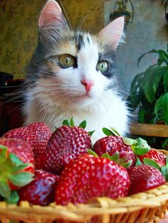 Fresh berries will remain untouched by me. Do you have any fish?