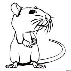 rat cartoon drawing step 2: trace over the initial sketch to form a tidy line drawing of an rat.