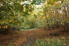October - November! Autumn! Colours Colours Colours!
