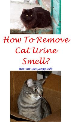 How to Remove Cat Urine Smell 11 Steps with wikiHow