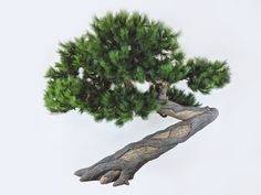 For a home or commercial project that feels welcoming and purposeful, all you need to do is identify some areas where you can place these completely refreshing artificial bonsai plants. Bonsai Art, Bonsai Plants, Cactus Plants, Artificial Indoor Plants, Bonsai Styles, Office Plants, Brush Strokes, Shrubs, Things To Do