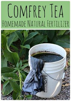 Comfrey Tea: Homemade Natural Fertilizer