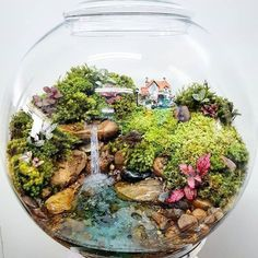 This fairy garden terrarium is so beautiful! Mini Terrarium, Terrarium Scene, Fairy Terrarium, Terrarium Plants, Terrarium Ideas, Succulent Terrarium, Mini Fairy Garden, Fairies Garden, Paludarium