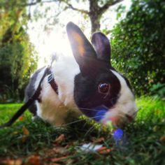 pipkin :) http://the-rabbits-blog.blogspot.co.uk/