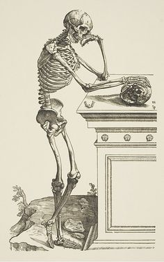 "Medical Illustrations, 1543–2008"" Exhibition"