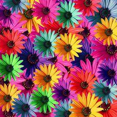 Questione di forma-Pictures Story: La vita è vita variopinta è colorato.