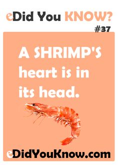 A shrimp's heart is in its head. ► Click here for more: eDidYouKnow.com