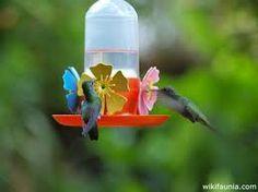 Resultado de imagen para colibri Humming Bird Feeders, Hummingbird, Outdoor Decor, Beautiful, Messi, Ideas Para, Home Decor, Birds, Animales