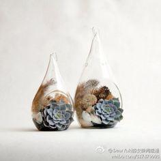 owl【植物神经】水滴瓶中的小多肉,美得像一件艺术品。
